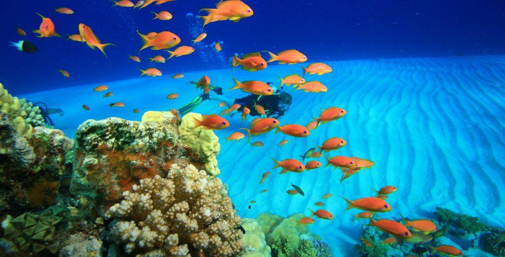 Découvrez les fonds marins de la mer Rouge...