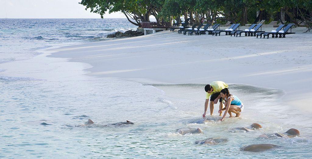 Profitez de la plage de sable fin...
