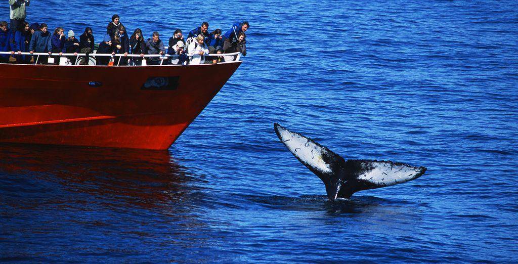 Vous pourrez également admirer les baleines