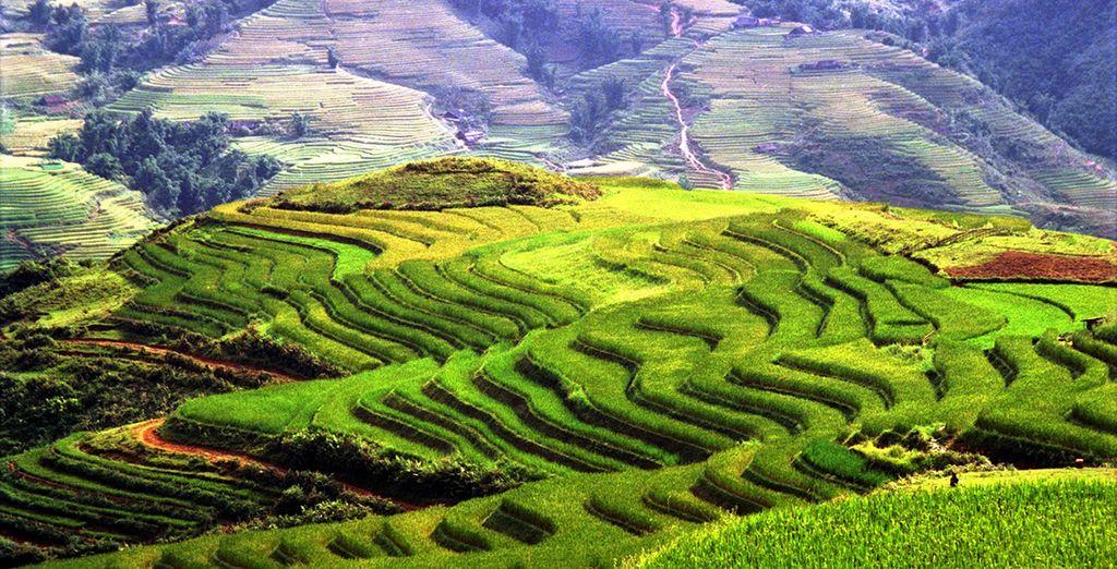 Entre rizières et somptueux paysages