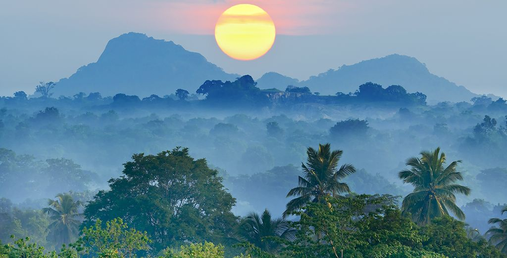 Commencez par plonger au cœur de la nature luxuriante du Sri Lanka