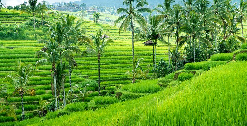 N'oubliez pas de vous rendre dans les rizières d'Ubud pour un spectacle inoubliable