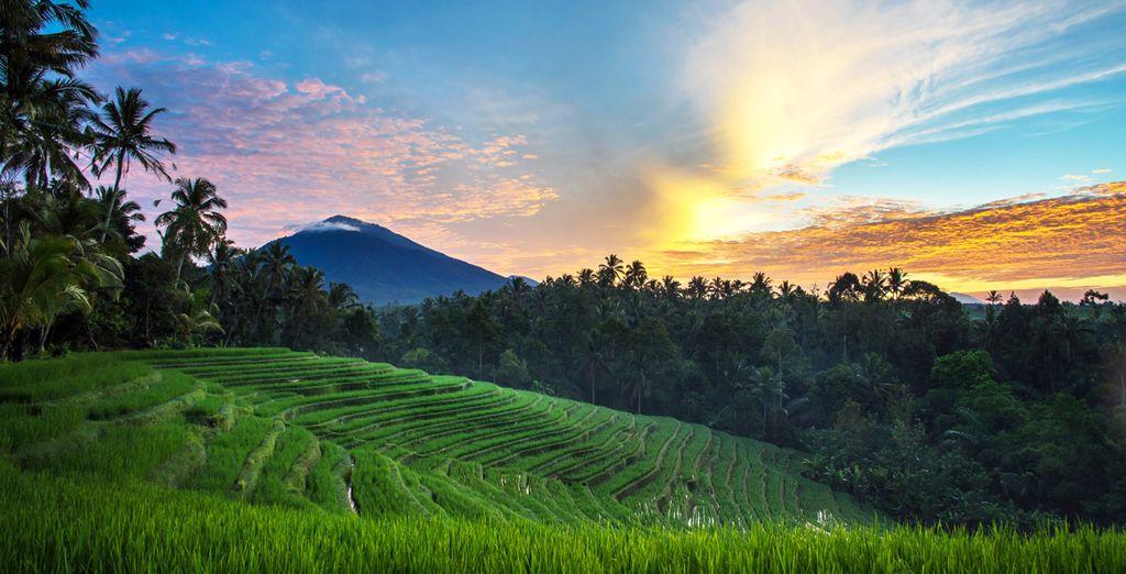 Vous quitterez ensuite la région d'Ubud...