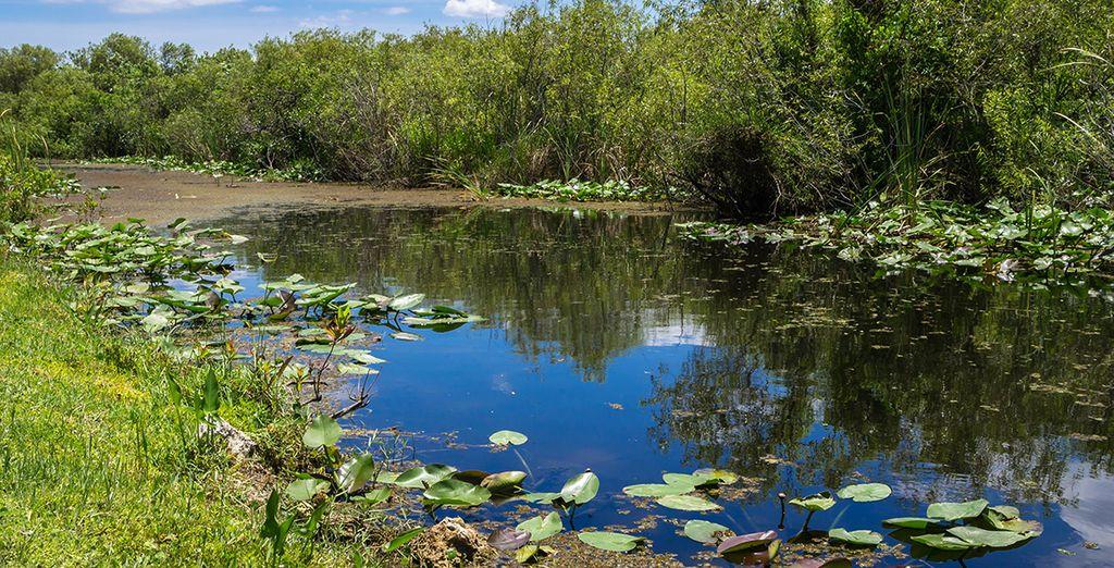 Photographie de paysages de Floride : l'Everglades