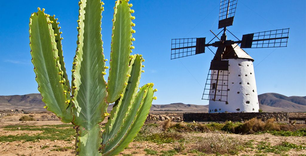 Fuerteventura va vous charmer...