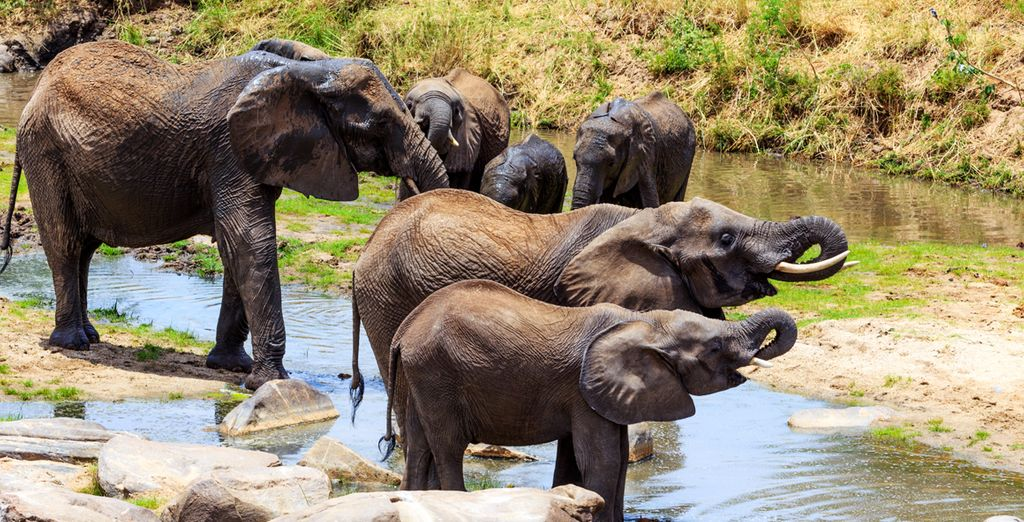 Découvrez les animaux africains au cœur de leur habitat naturel