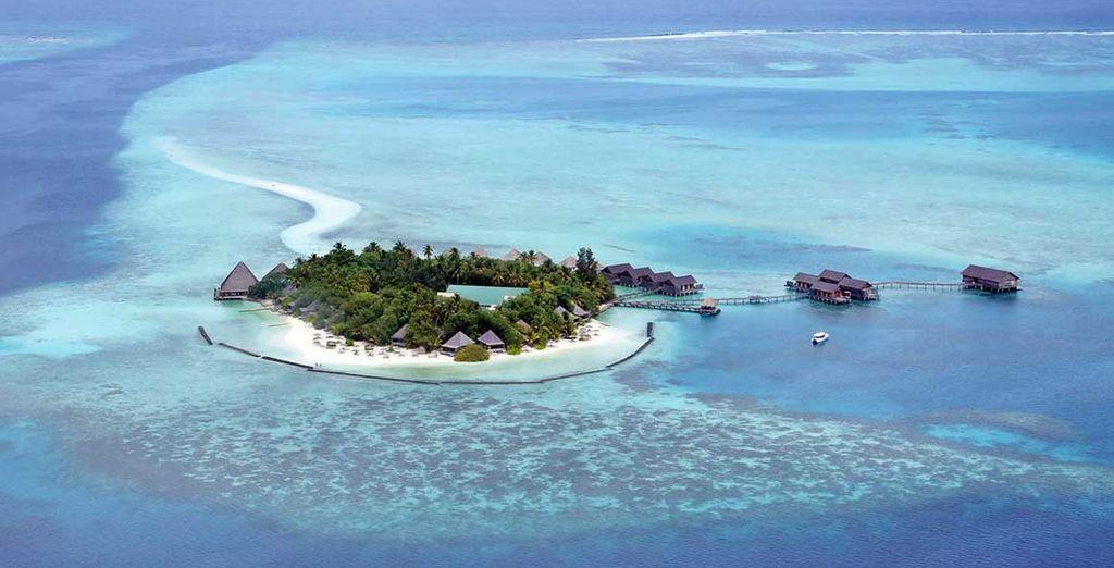 Située au nord de l'atoll d'Ari, l'île de Gangehi est un véritable bijou