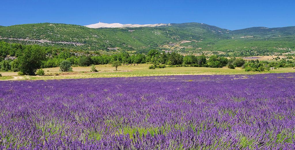 Bon séjour en Provence !