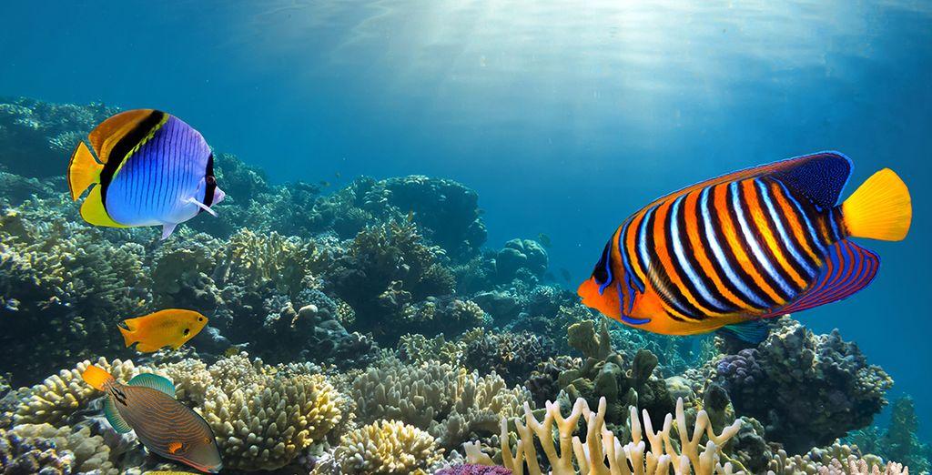 Ou plongez sous les eaux turquoise de la mer des Caraïbes