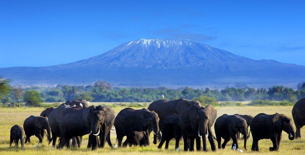 A Amboseli...