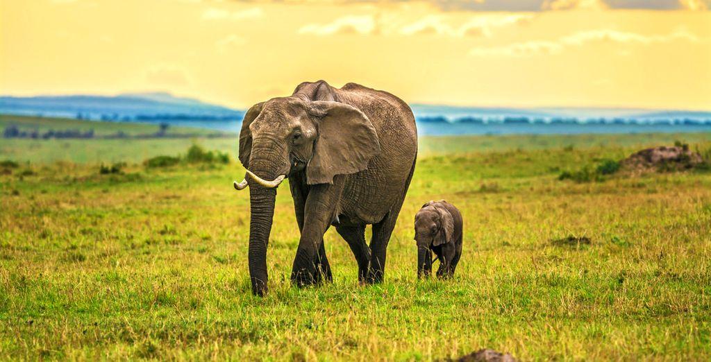 L'aventure vous appelle... Direction le Kenya !