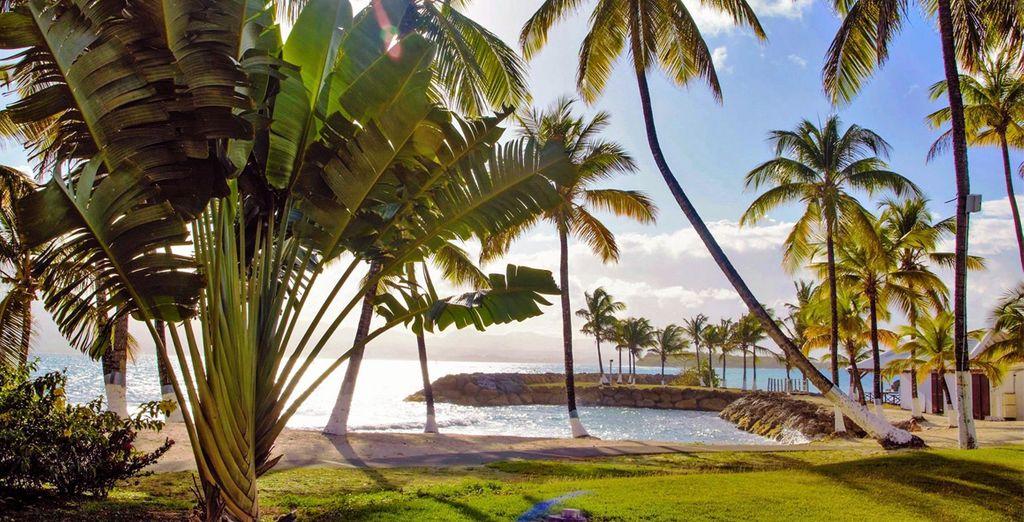 Bonnes vacances sur l'île aux belles eaux !