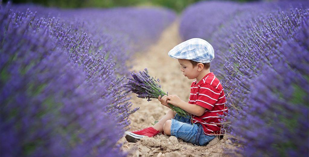 Rendez-vous en Provence, dans le charmant village de Saint-Rémy... - Château de Roussan 4* Saint Rémy de Provence