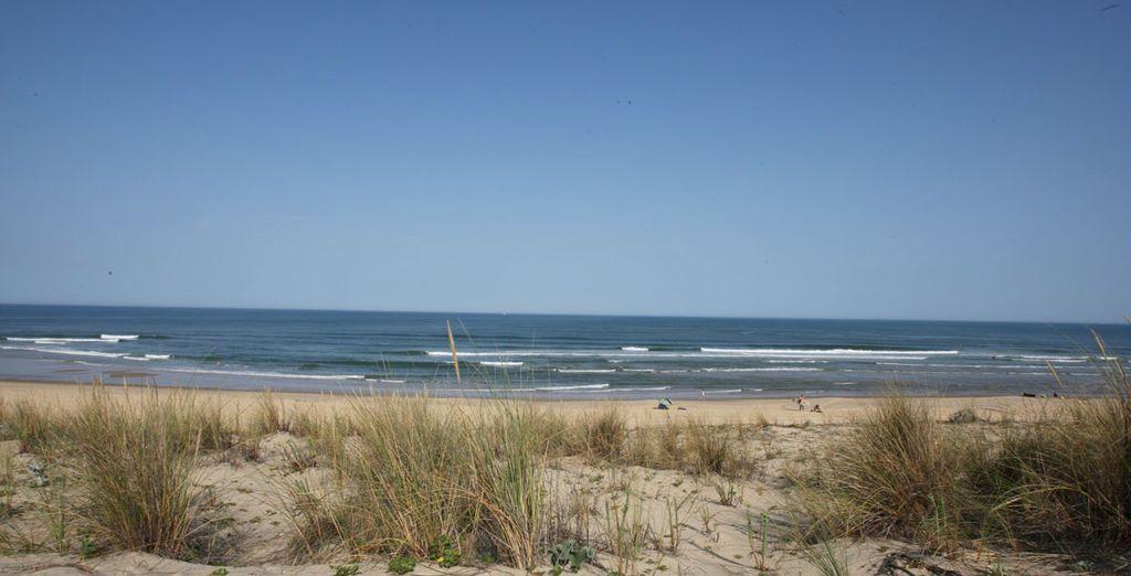 Avant de regagner les plages de la côte Atlantique