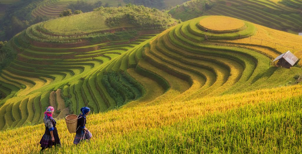 Entre d'incroyables rizières...