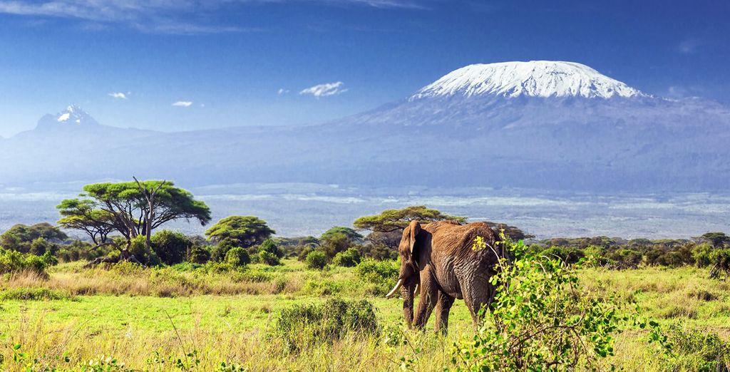 En combinant détente et découvertes naturelles au Kenya !