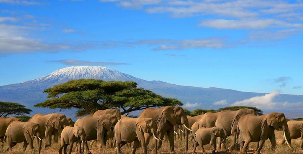 Et admirez la beauté des paysages kenyans