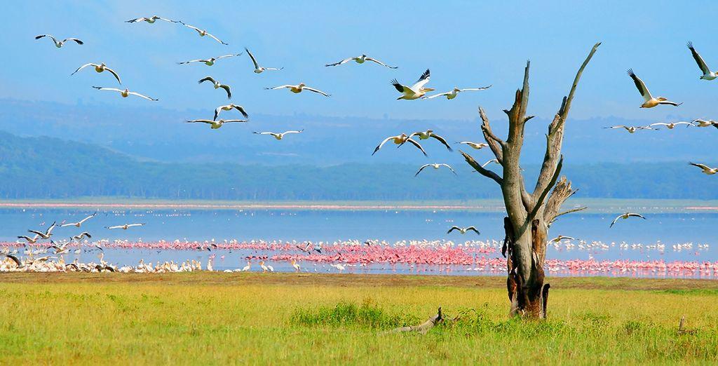 Photographie du lac Navaisha au Kenya et flamants roses