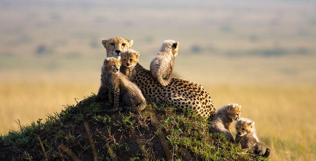 Faune à découvrir au Kenya