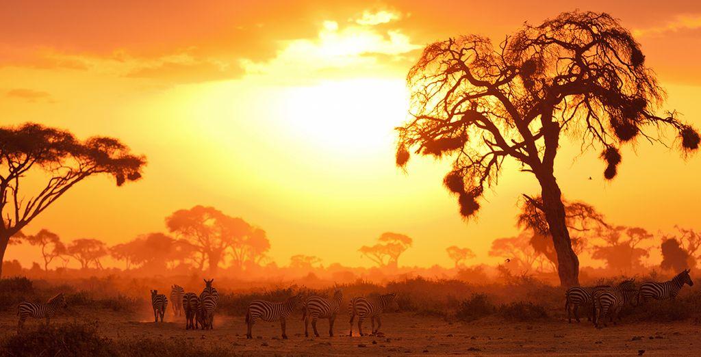 Photographie du parc du Masai Mara et zèbres au Kenya