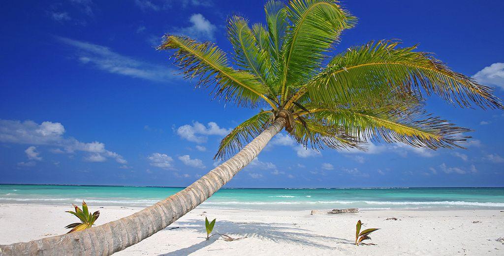 Sur la Riviera Maya !