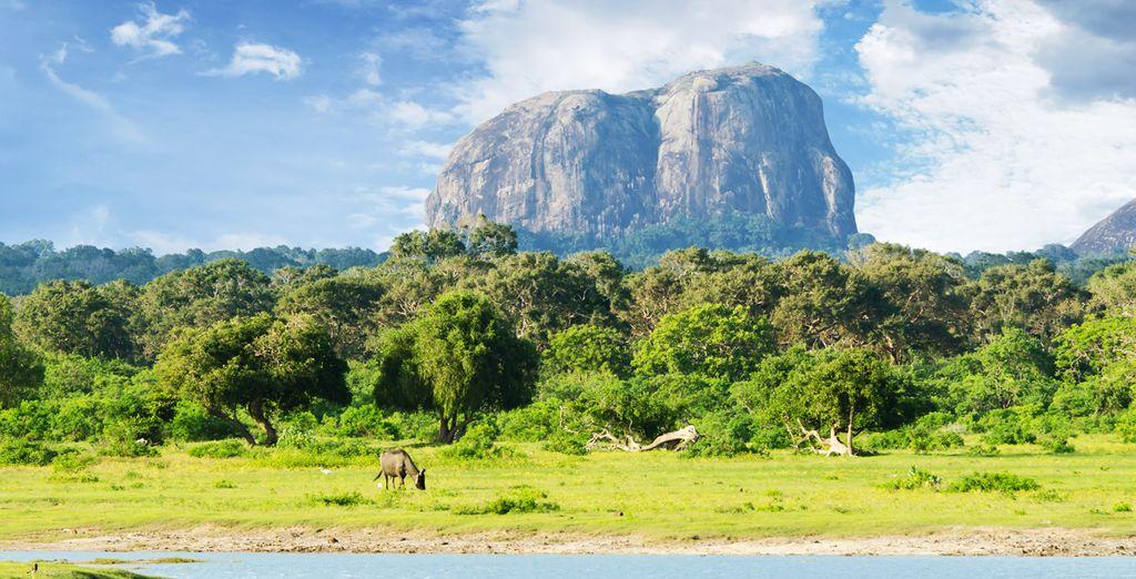 Suivez-nous au cœur d'un pays vraiment magique : Le Sri Lanka