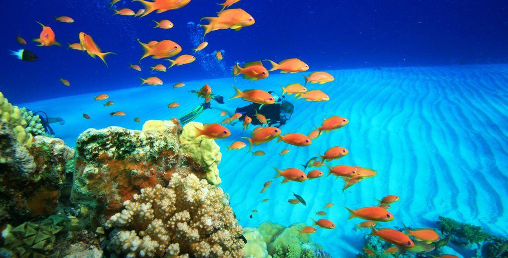 Comme découvrir les fonds marins magnifiques de la Mer Rouge