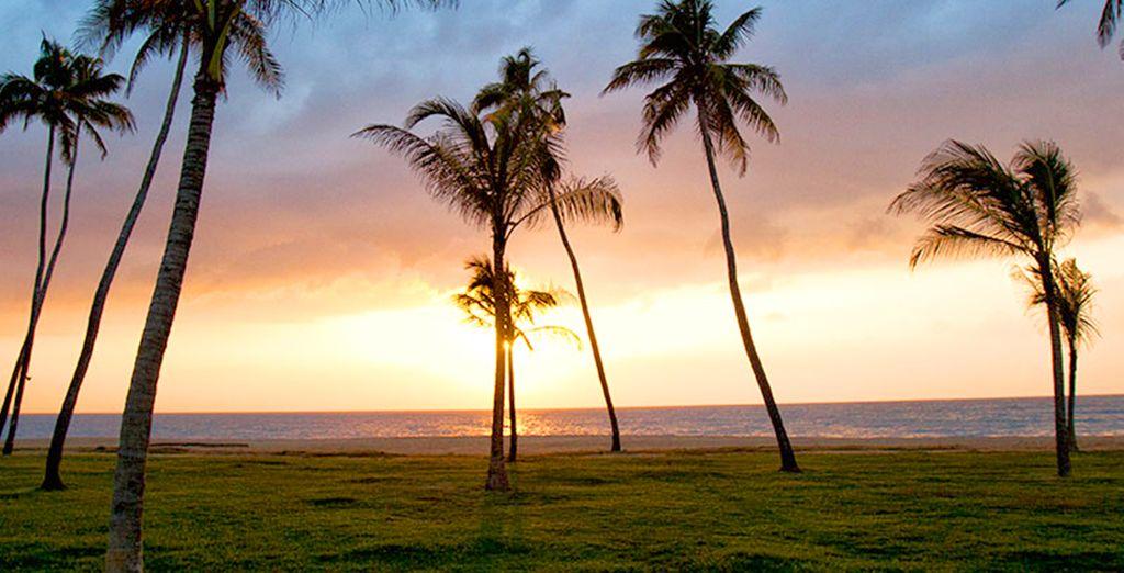 Vous reviendrez littéralement sous le charme de votre séjour au Sri Lanka