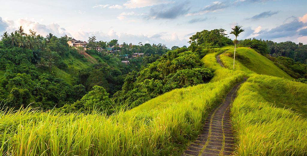 Votre découverte... commence par la région d'Ubud