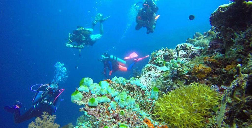 Explorez les récifs coralliens colorés
