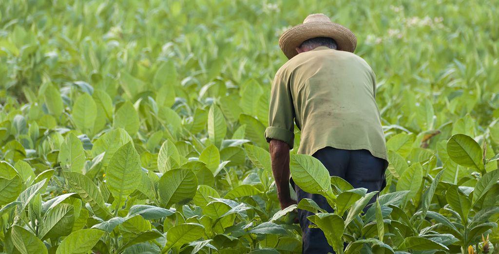 Où bat le cœur de la vie agricole