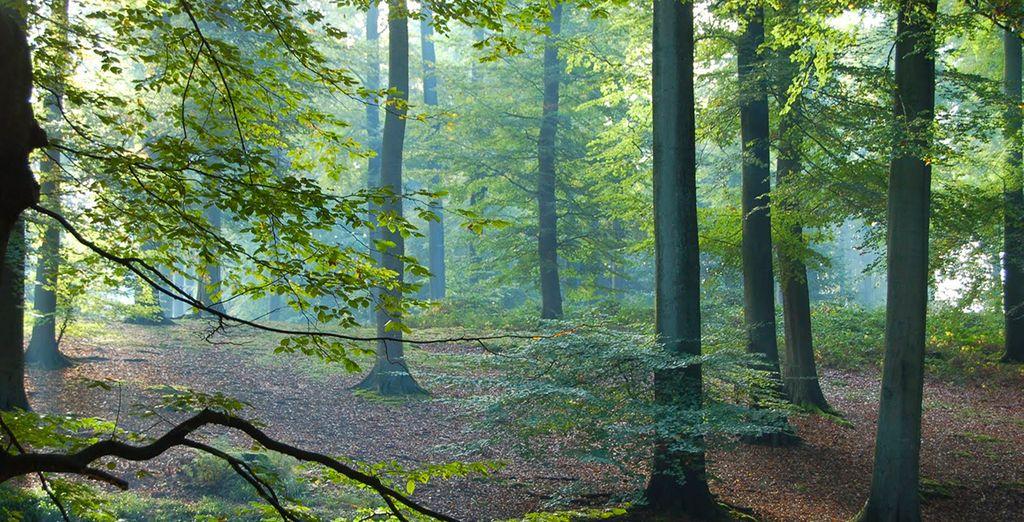 Photographie de la forêt de Soigne à proximité de Bruxelles