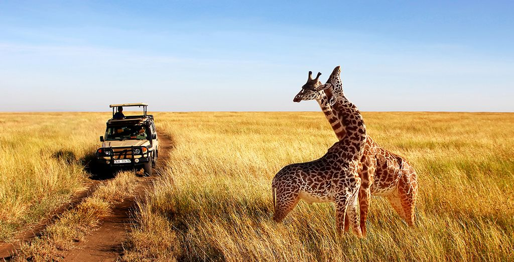 Safari en Tanzanie de 3 ou 5 nuits avec extension à Zanzibar
