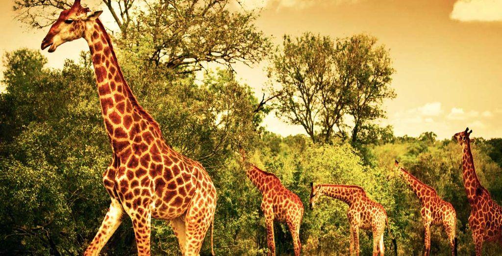 Partez à l'aventure en choisissant l'extension en safari