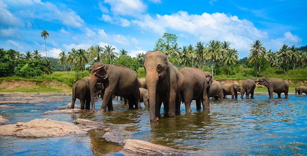 Le Sri Lanka vous réserve d'incroyables surprises