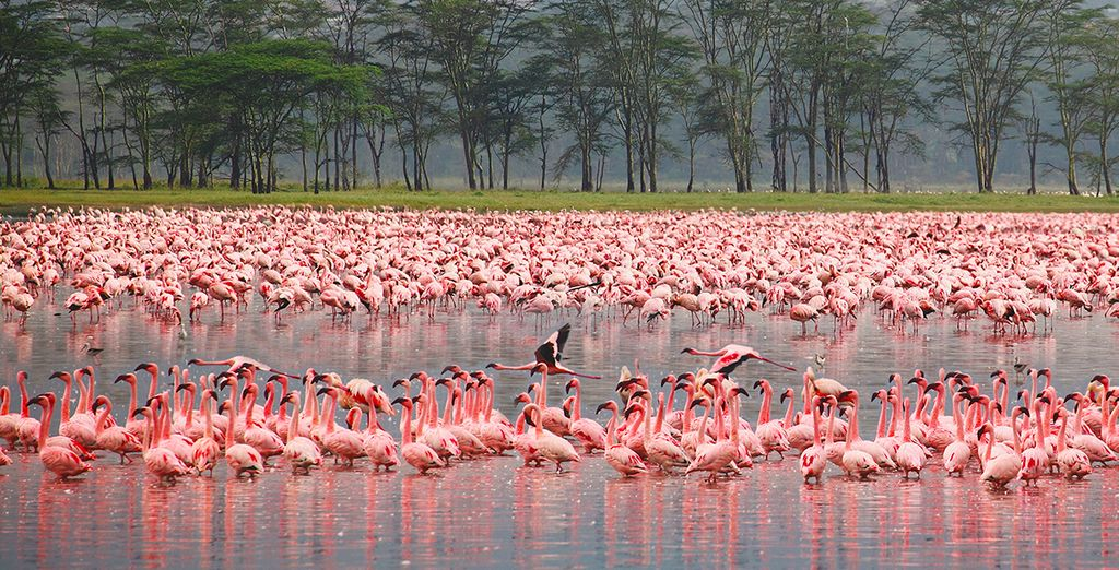 Comme le lac Nakuru...