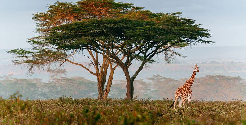Les terres préservées vous entourent