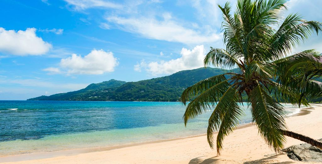 Prenez un bain de soleil sur la plage