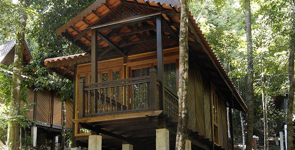 Situé en pleine forêt tropicale...