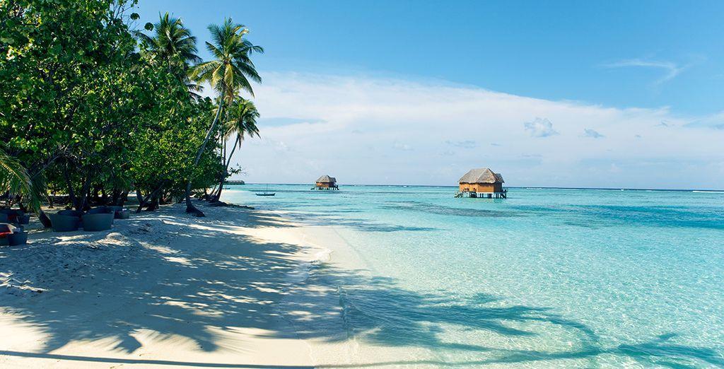 Au bord de la plage... - Meeru Island Resort & Spa **** Malé