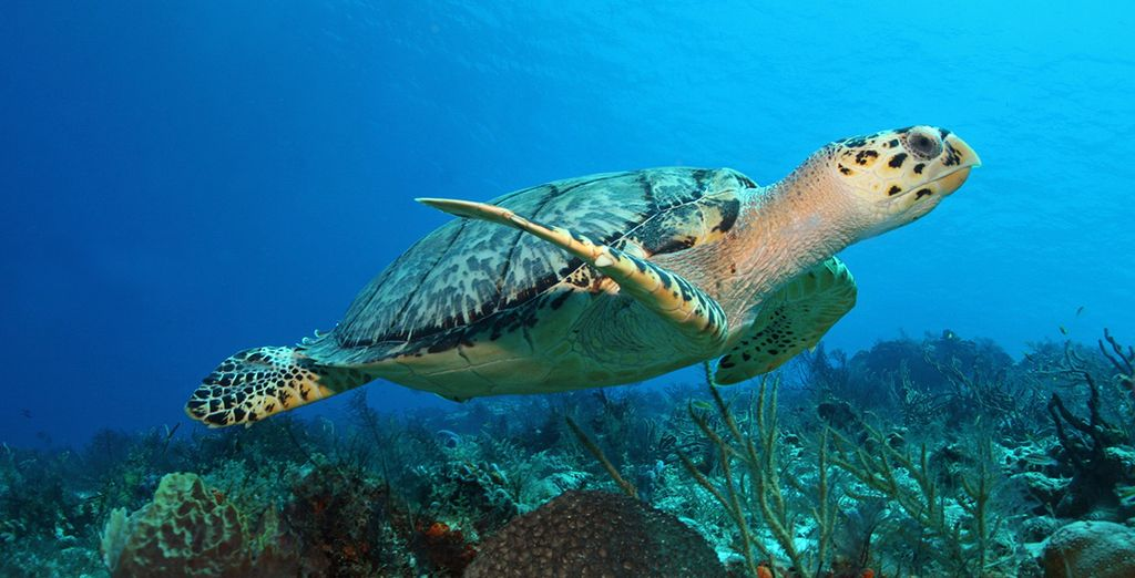 Vous admirerez de sublimes fonds marins à Akumal ou Cozumel...