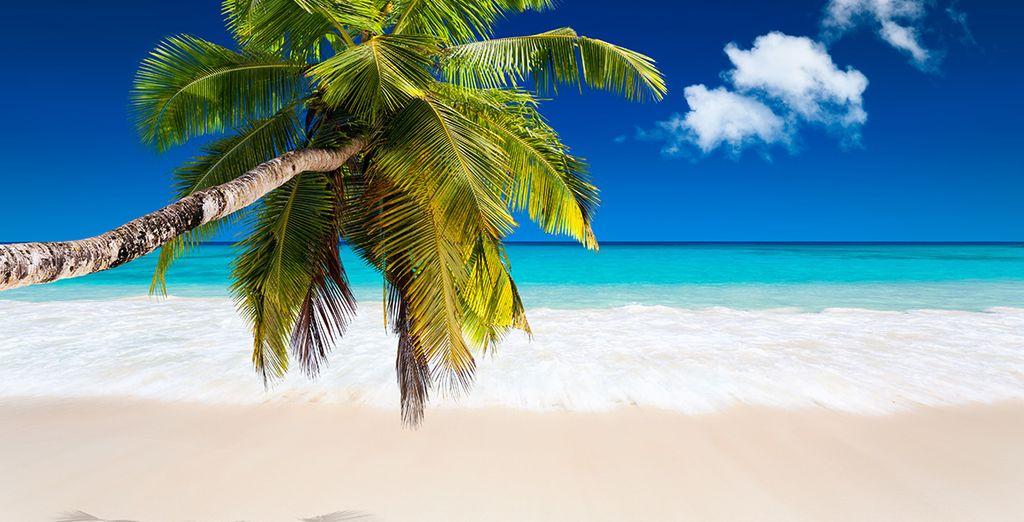 Et les plages de rêve des Maldives !