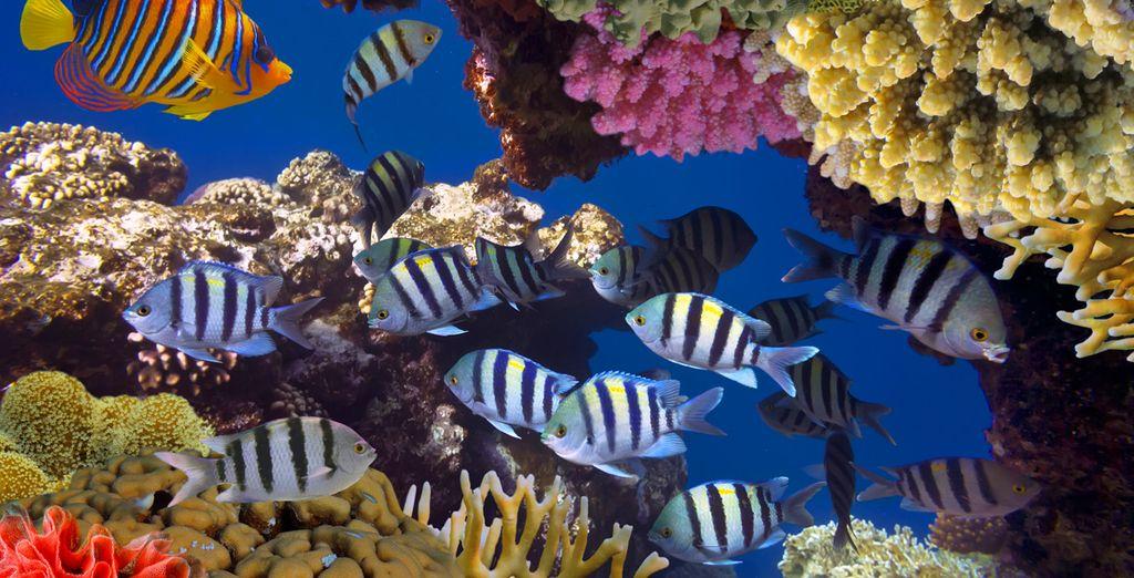Et les fonds marins incroyables...