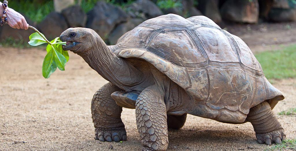 Rencontrez des tortues géantes