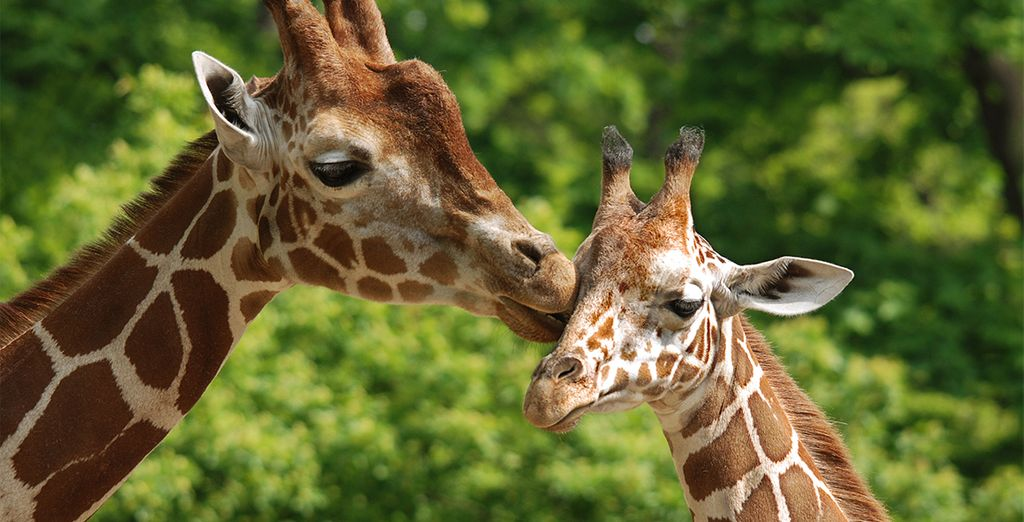 La réserve d'animaux la plus riche du continent...
