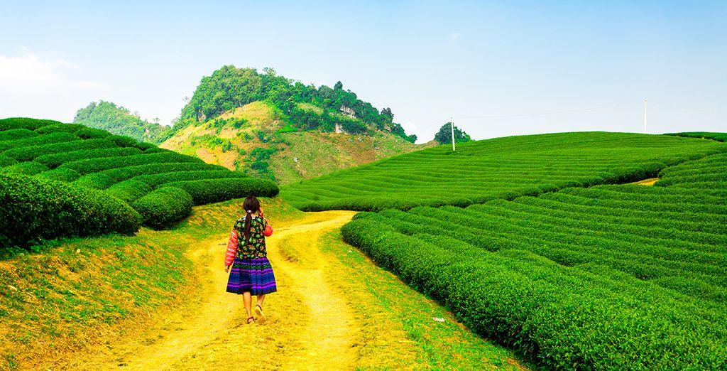 Et si vous partiez explorer le Vietnam ?