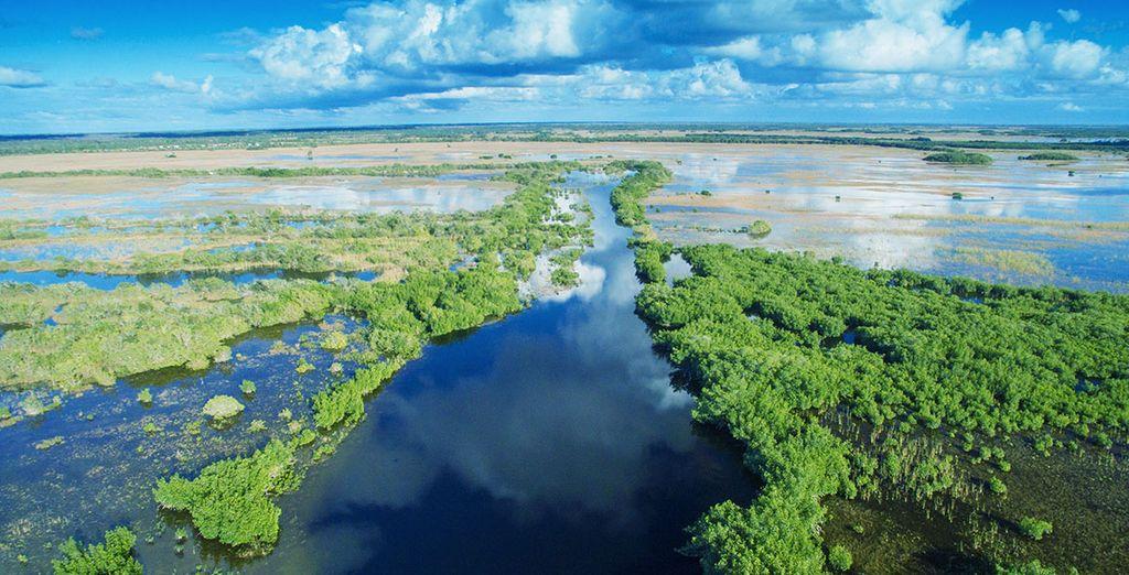 Découvrez les Everglades