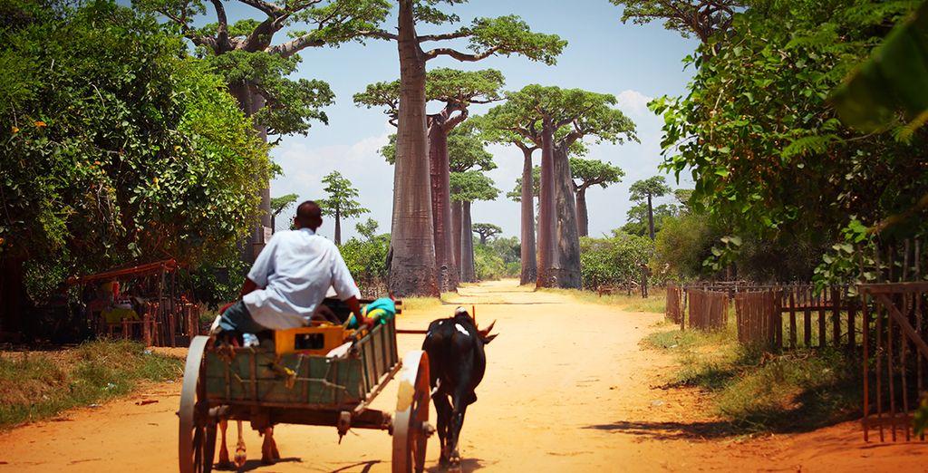 Madagascar: alla scoperta delle bellezze naturali dell'isola