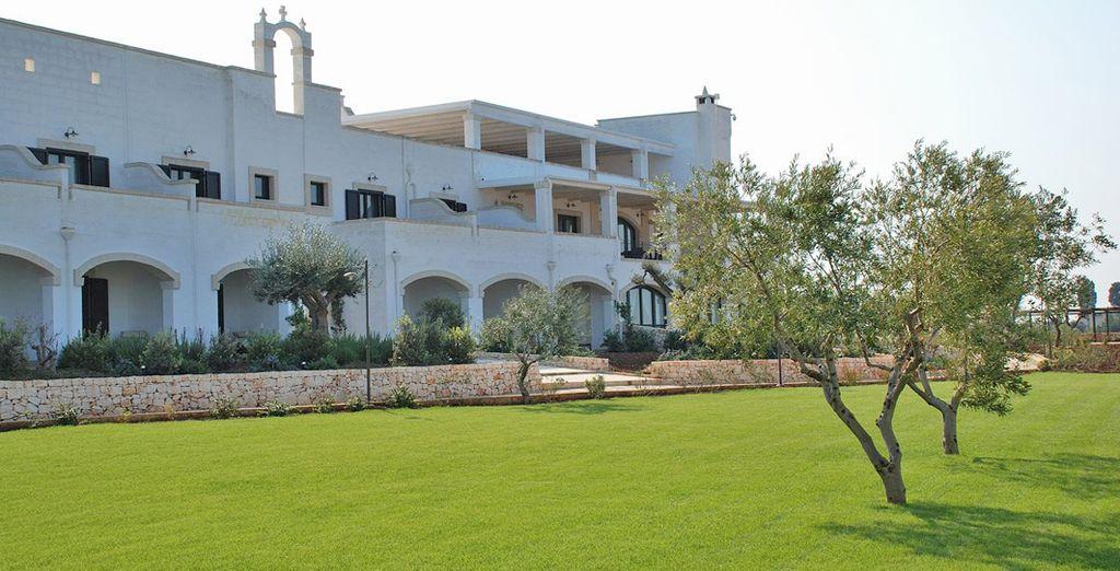 la natura rigogliosa con i suoi alberi d'ulivo sarà la cornice perfetta per il vostro soggiorno in Puglia