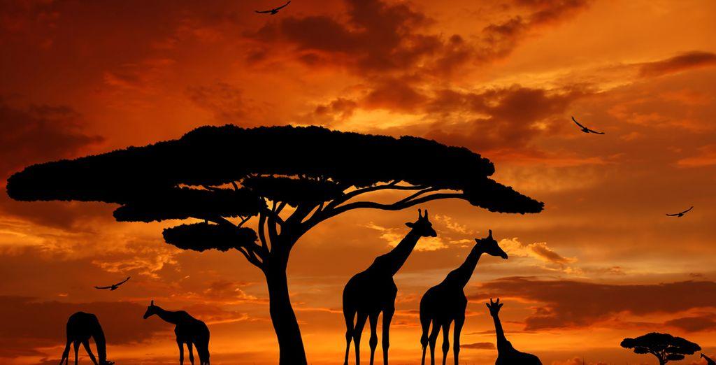 Venite a scoprire le magie dell'Africa alle prime luci dell'alba
